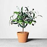 Faux Olive Branch Plant