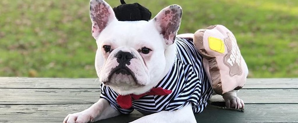 Photos of French Bulldogs in Halloween Costumes