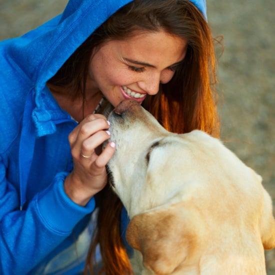 هل يؤثر طعام الكلاب على صحّة أسنانها