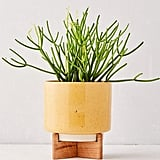 """Cecily 6"""" Planter and Stand"""
