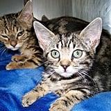 Source: Flickr User Rocky Mountain Feline Rescue