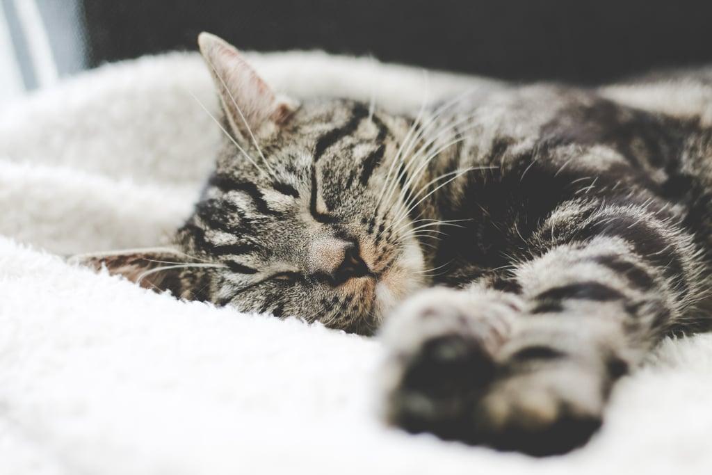 Awww, sleepy nugget.