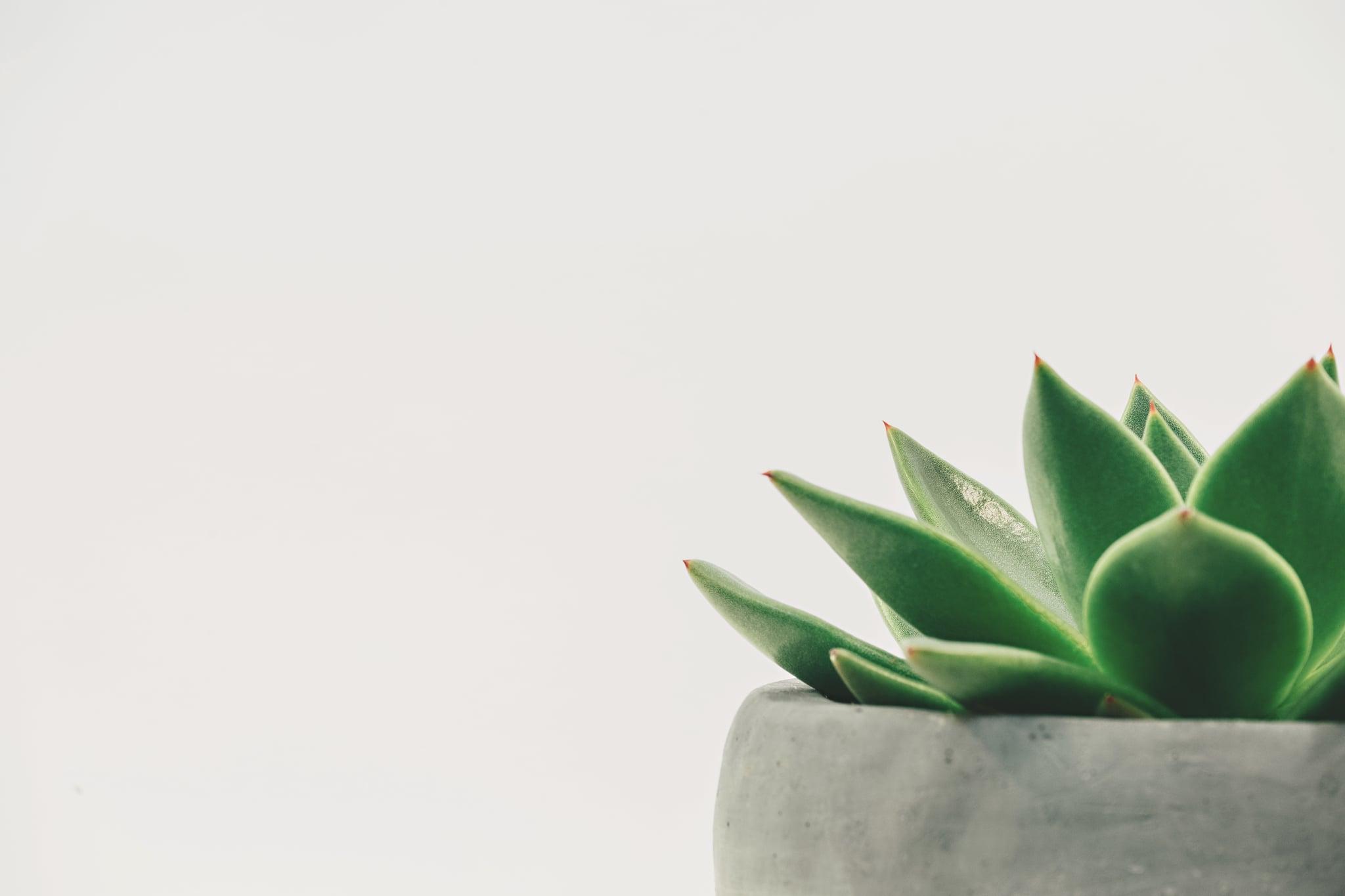 Beauty Benefits Of An Aloe Vera Tree