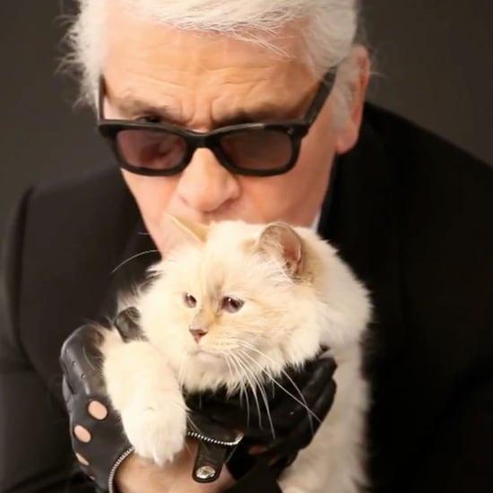 Everything You Should Know About Karl Lagerfeld's Cat, Choupette!