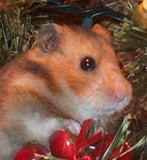 Cute Alert: Christmas Ham