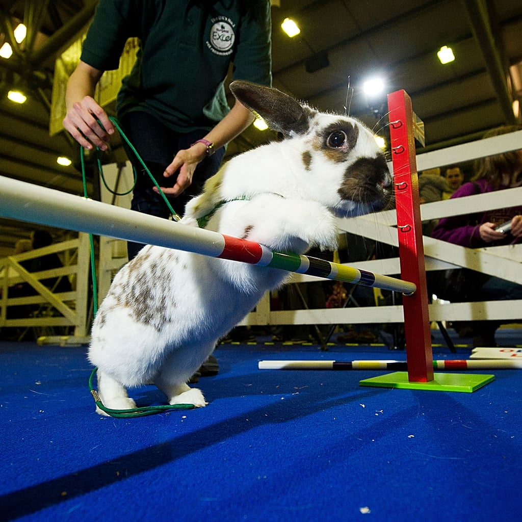 Cute Rabbits Jumping at 2012 Grand National Pictures