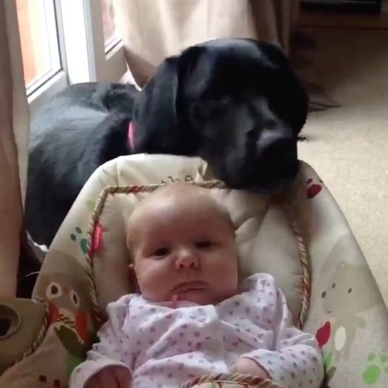 Dog Rocks Baby in Bouncer