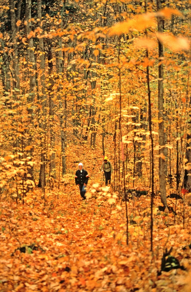 Walk In The Leaves Fall Leaves Kid Photo Inspiration