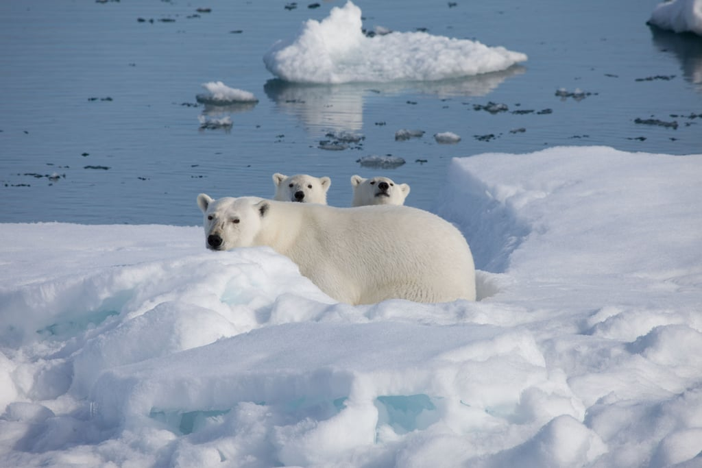 How cute are these polar bears? Photo courtesy of Warner Home Entertainment