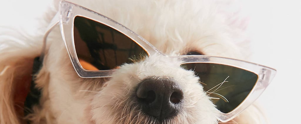 Best Sunglasses For Dogs 2020
