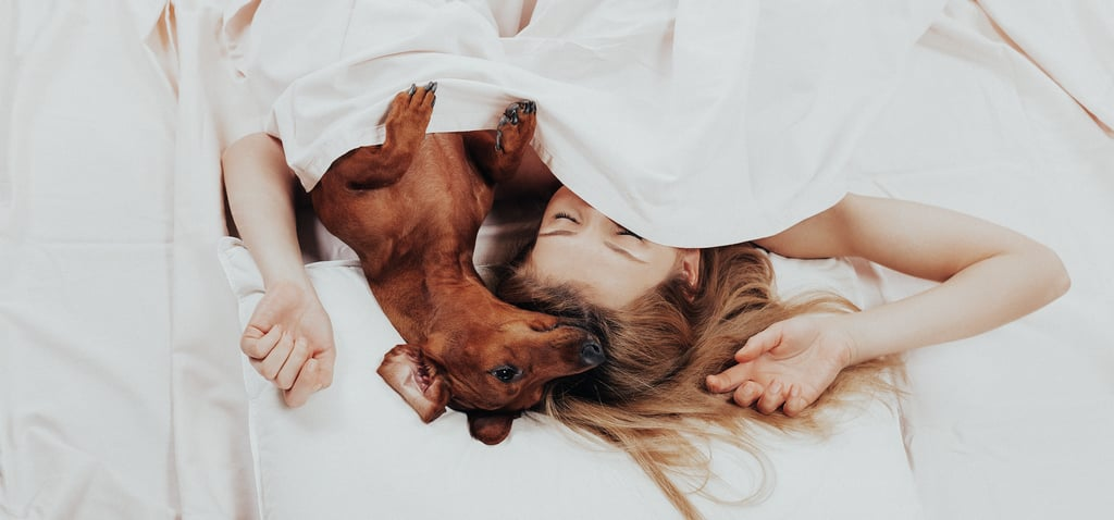 Essential Products For Pet Owners
