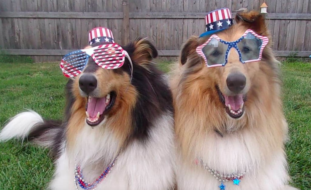 Photos of Cute Dogs and Puppies in July 4th Costumes