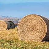 Hay Wraps