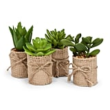 Abbott Collection Succulents in Burlap Wrap
