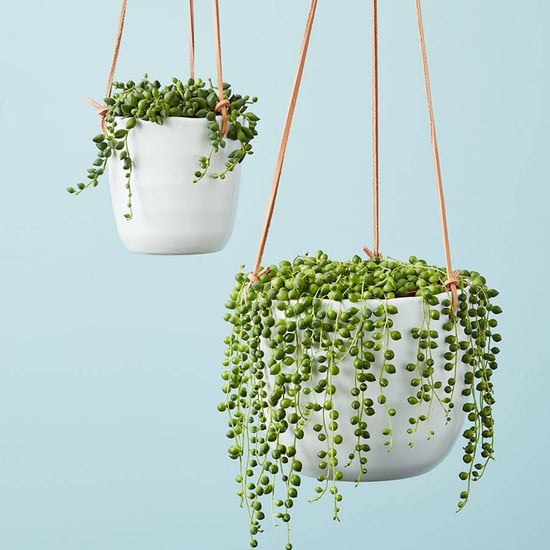 Best Plants For Hanging Planters