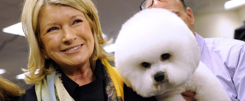 Martha Stewart Making CBD Pet Products