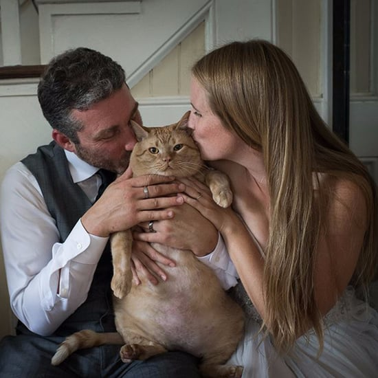 Couple's Large Cat in Wedding Photos