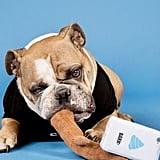 Bark Selfie Stick Dog Toy