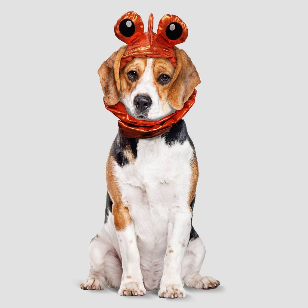 Goldfish Halloween Dog Costume