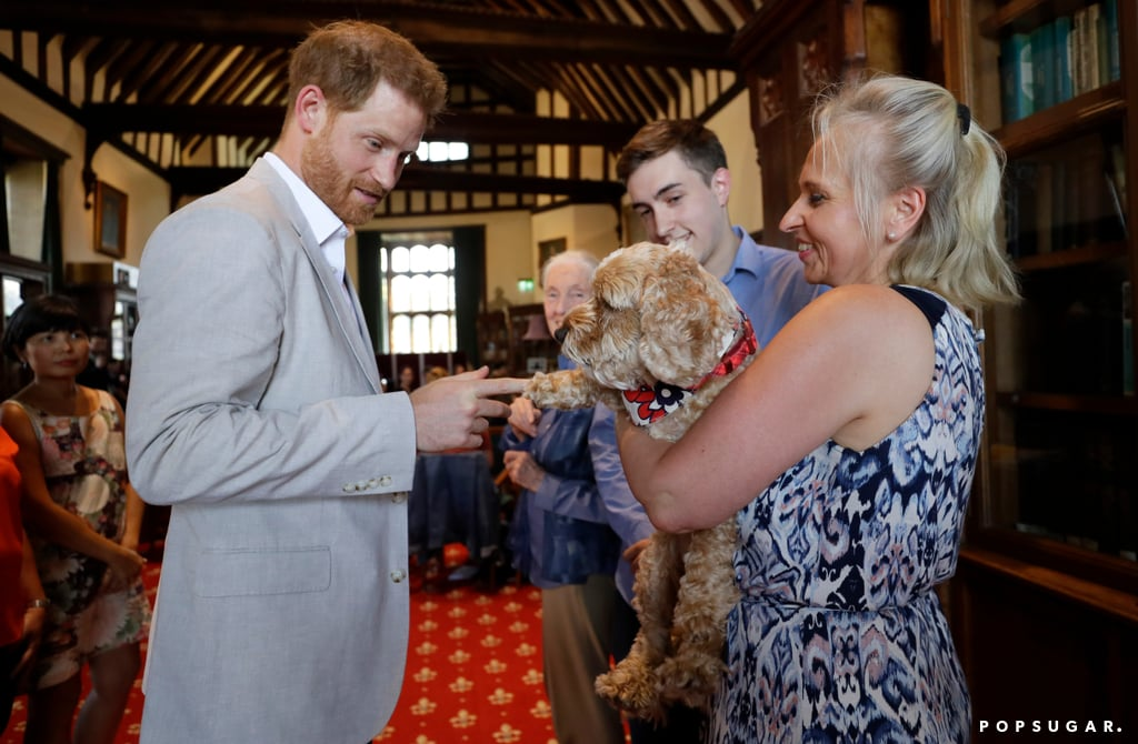 "Prince Harry got back to work on Tuesday after attending the UK premiere of The Lion King last week. The Duke of Sussex met with animal and environmental conservationist Dr. Jane Goodall at St. George's House at Windsor Castle while she hosted a global leadership meeting for the Roots & Shoots organization (which she founded in 1991 and which encourages young people to make a difference in the environment). Harry — who also shares a passion for environmental conservation — delivered a speech to inspire young people and communities to save the planet.  ""The good news is that young people like you don't need to be convinced that we must urgently intervene [to help the planet]; you are actively doing this every single day, and your dedication to effecting change is outstanding,"" Harry said. ""As my grandmother, the Queen, once said, 'Sometimes the world's problems are so big we think we can do little to help. On our own we cannot end wars or wipe out injustice, but the cumulative impact of thousands of small acts of goodness can be bigger than we imagine.'"" Still, the cutest moment, perhaps, was when Harry couldn't resist petting an adorable dog at the event. Technically, that goes against royal protocol, but tell me, could you resist that furry face? Maybe Harry was missing his dog Oz. See more photos of Harry's latest outing ahead!      Related:                                                                                                           32 Pictures of Prince Harry With Animals That Might Just Make Your Heart Burst"