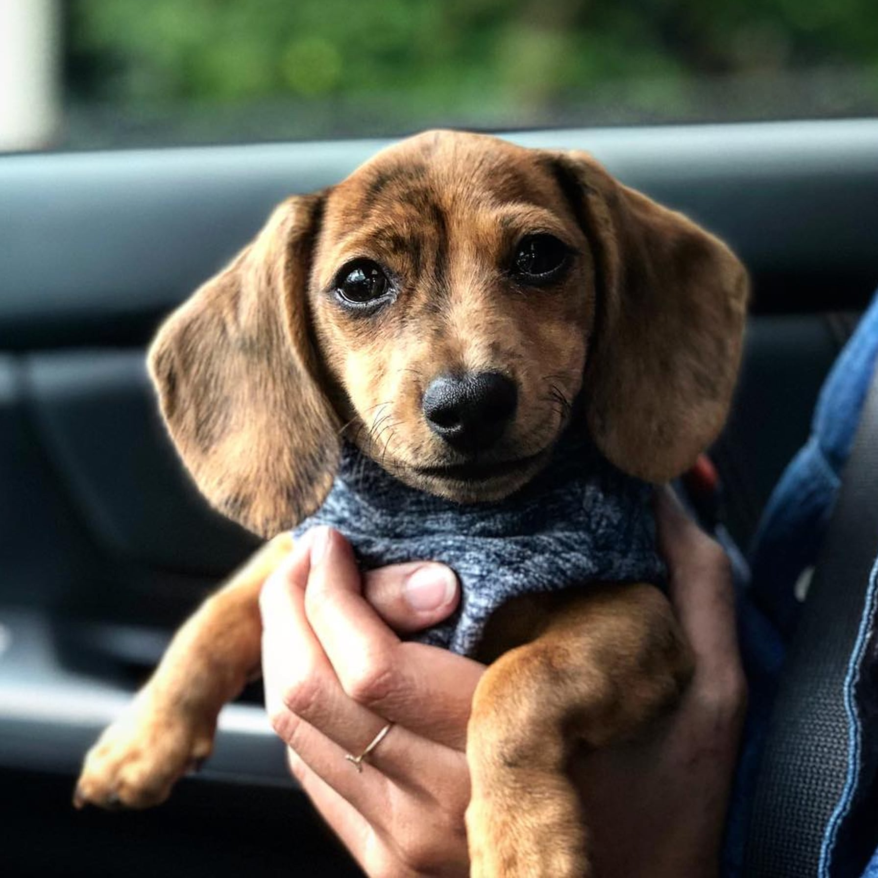 Cute Pictures Of Dachshund Puppies Popsugar Pets