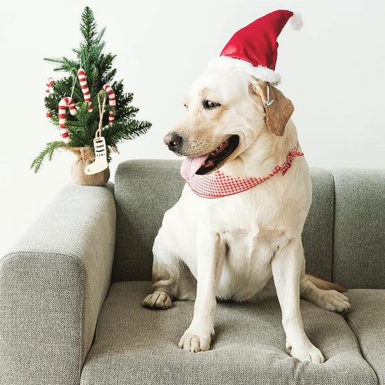 Festive Holiday Pet Photos