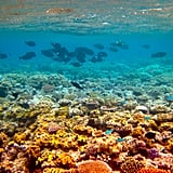 Finding Nemo: The Great Barrier Reef, Queensland, Australia