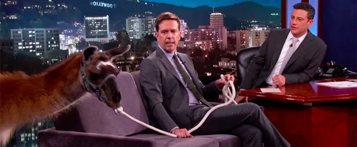 Ed Helms Brought a Llama on Jimmy Kimmel Live — and That's Just the Beginning