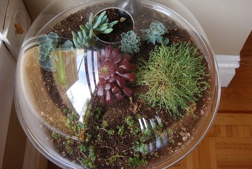 Do You Have a Terrarium?