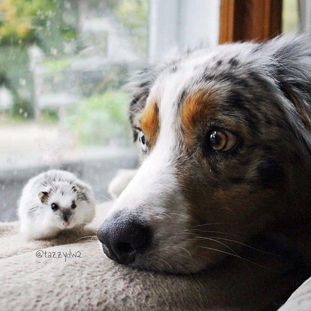 Unlikely Pet Friends