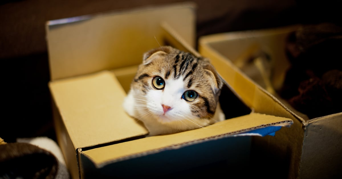 Letting Your Cat Play in Your Leftover Cardboard Boxes Is Actually Good For Them — Here's Why