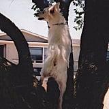 Monday Got You Up a Tree?
