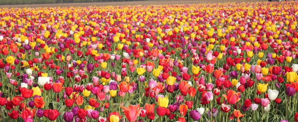 10 Places to See the Most Stunning Flowers in the US