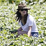 Rachel Bilson was surrounded by green produce.