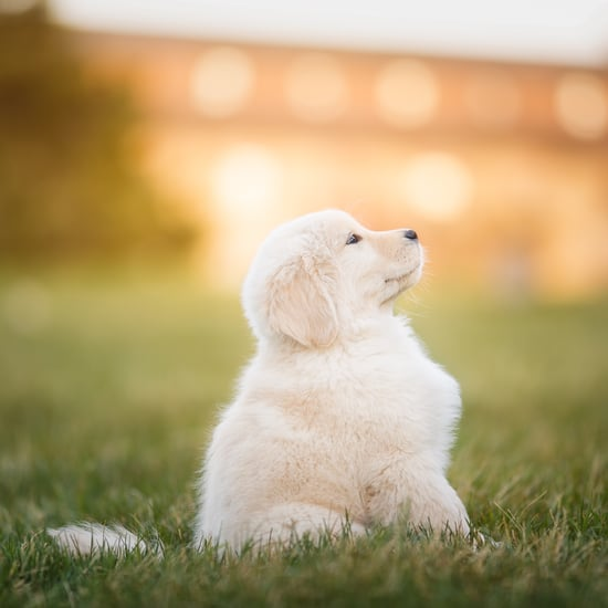Unique Dog Names to Help Your Dog Stand Out