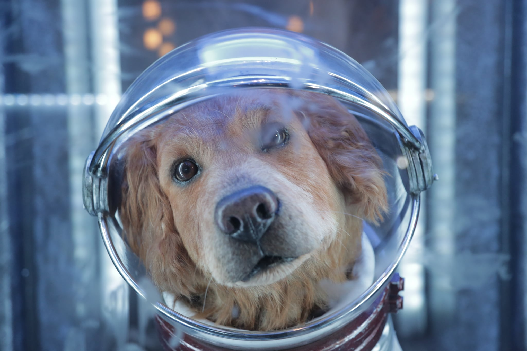 Cosmo the Spacedog From Disneyland's Guardians of the ... Cosmo The Dog Guardians Of The Galaxy
