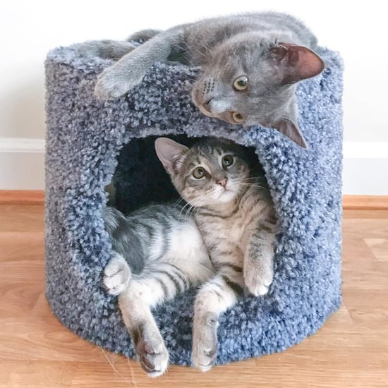Reasons to Adopt 2 Cats at the Same Time