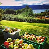 Barrels of Apples