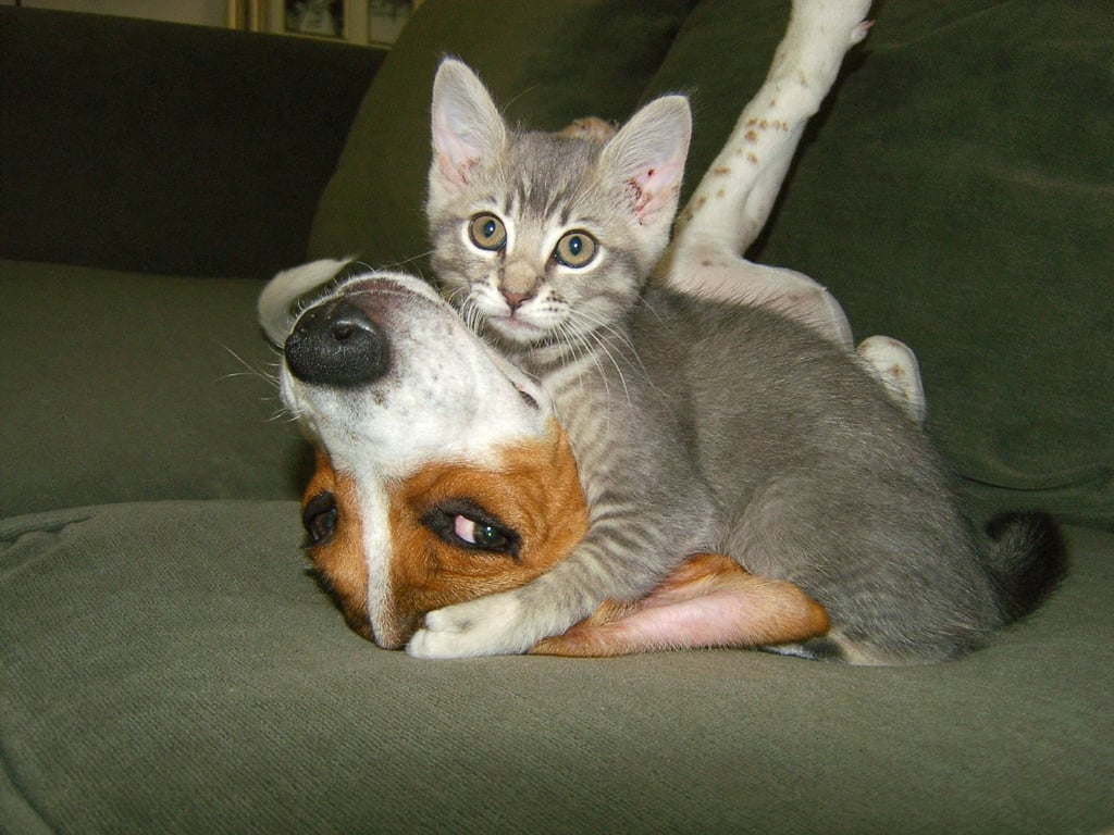 This pup loves his kitten friend so much he lets her win at wrestling every time. Source: Imgur user Flick1999