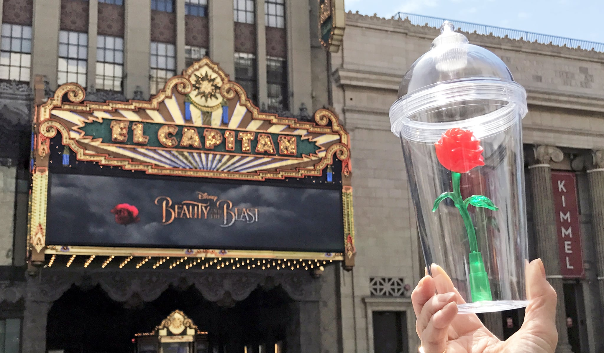 Beauty The Beast Rose Cup Available At El Capitan