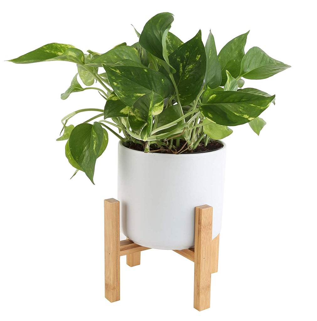 22 Plants From Amazon That Will Clean the Air in Your Home