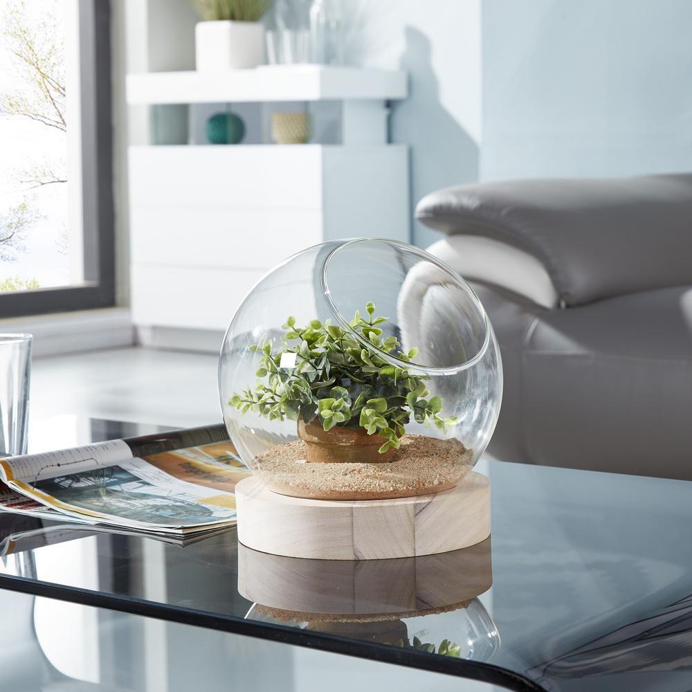 Danya B Glass Orb Terrarium