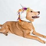Big Dog Unicorn Costume