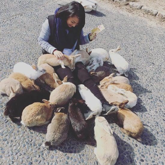 Okunoshima Bunny Island Japan