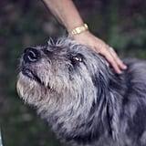Volunteer to walk shelter animals together.