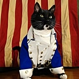 Cat Cosplaying as Alexander Hamilton