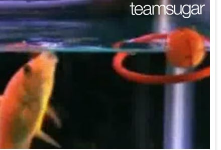 Cute Alert: Goldfish Plays an Array of Sports