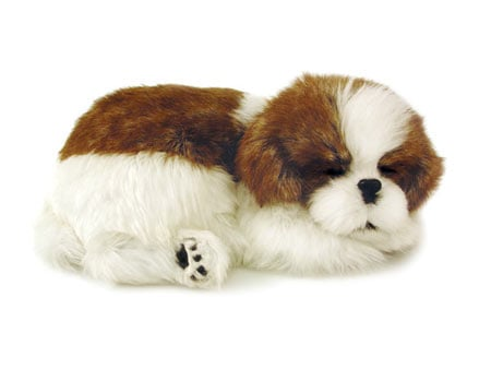Perfect Petzzz: Shih Tzu