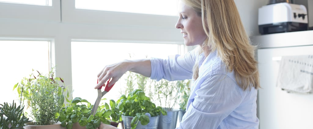 10 Cooking Plants You Can Keep on Your Apartment Windowsill