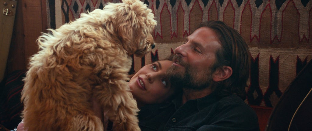 Is Bradley Cooper's Dog in A Star Is Born?